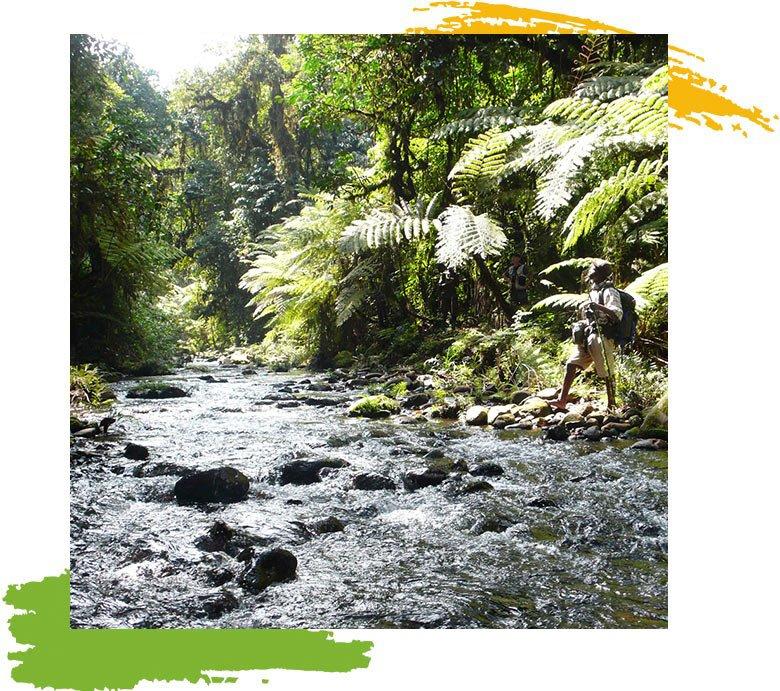Bwindi Kashasha river trail hiking