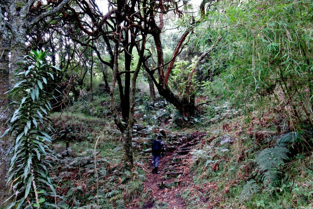 mgahinga batwa pygmy forest people trail
