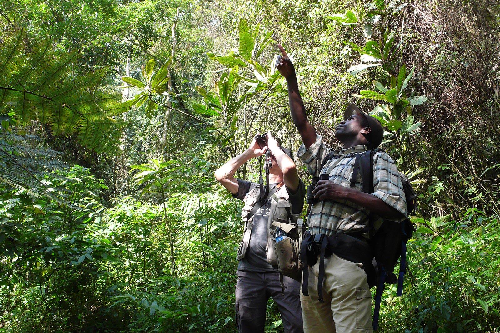 Birding in Nkuringo