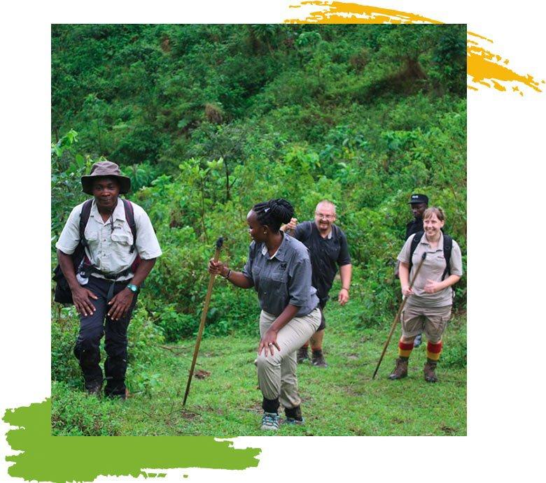 Nkuringo Walking Safaris